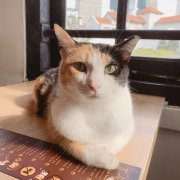 The Cat Cafe - Yoghurt