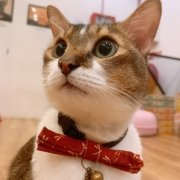 The Cat Cafe - Butter