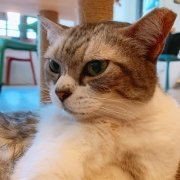 The Cat Cafe - Silver
