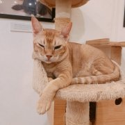 The Cat Cafe - Ginny