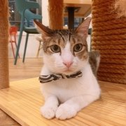 The Cat Cafe - Cookie